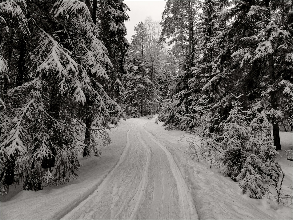 "photo ""The tale in black-and-white"" tags: landscape, black&white, forest, snow, winter, дорожка"
