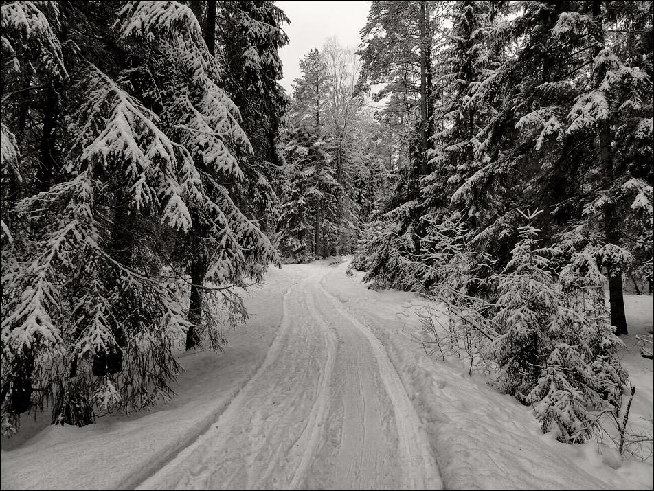 """фото """"Черно-белая сказка"""" метки: пейзаж, черно-белые, дорожка, зима, лес, снег"""
