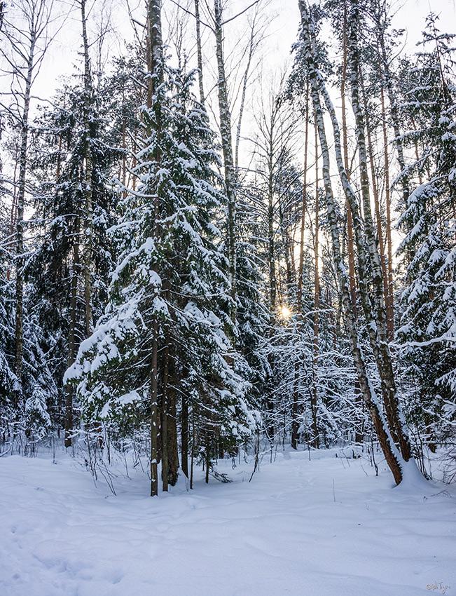 "фото ""Редкое солнышко"" метки: пейзаж, природа, зима, лес"