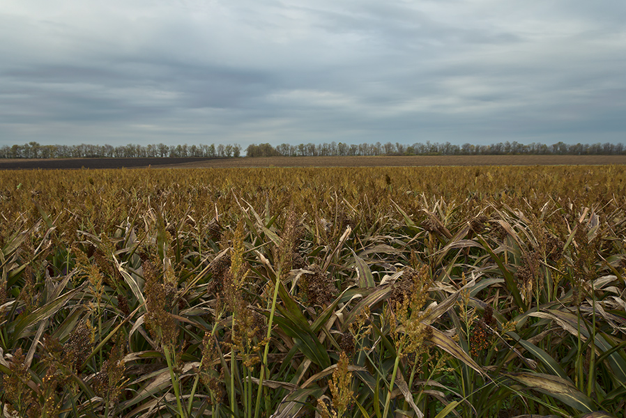 """фото """"В поле ..."""" метки: пейзаж, Запорожье, Украина, облака, октябрь"""