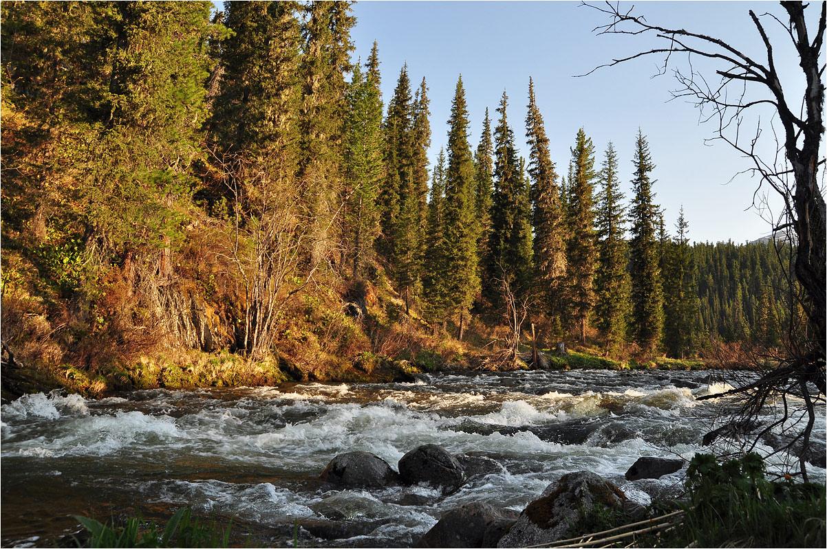 """фото """"Раннее утро"""" метки: пейзаж, Азия, вода, горы, ели, лес, лето, рассвет, река, туризм, утро"""