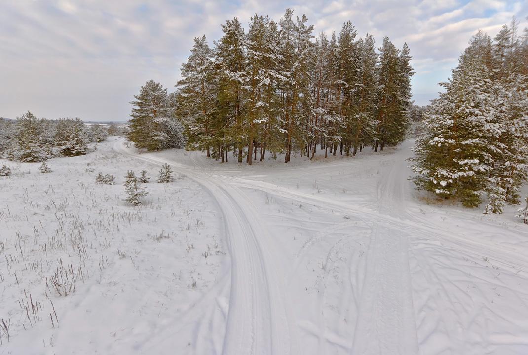 """фото """"Зимний бор"""" метки: пейзаж, бор, зима, мороз, сосны"""
