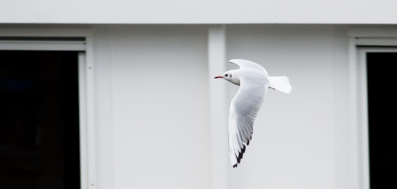 "photo ""Aerodynamics"" tags: nature, travel, bird, flight, чайка"