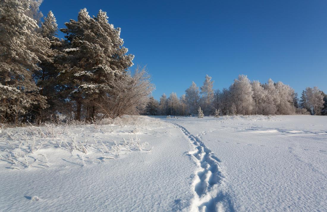 """фото """"Морозные следы"""" метки: пейзаж, деревья, зима, иней, лес, мороз, небо, следы, снег"""