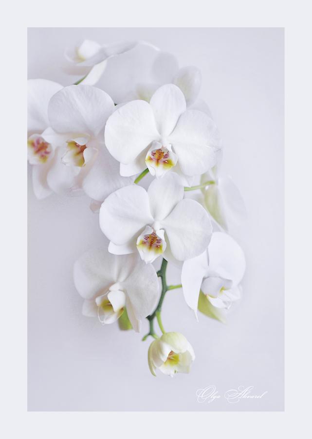 "фото ""***"" метки: природа, орхидеи, цветы"