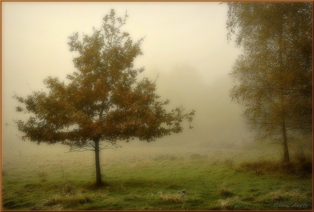 """фото """"***"""" метки: пейзаж, природа, fog, рассвет"""