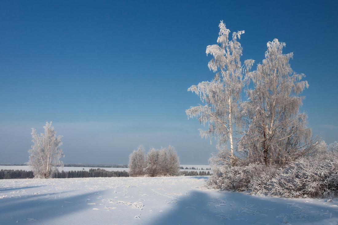 "фото ""Морозная синева"" метки: , березы, зима, иней, лес, мороз, поле, склоны, снег, солнце, травинки"