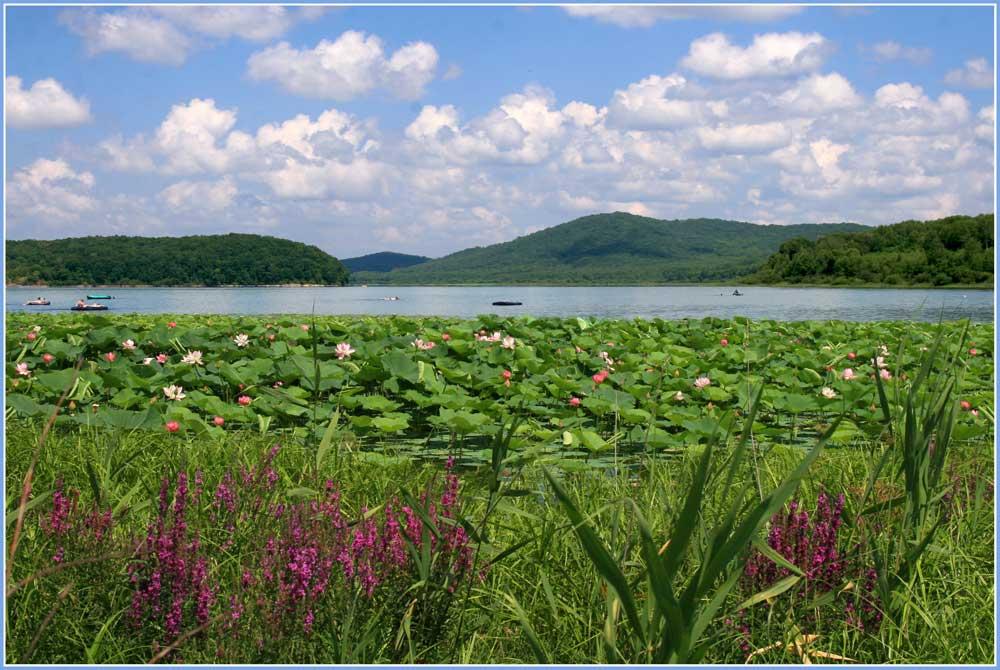 """фото """"Ах лето!"""" метки: пейзаж, лето, облака, цветы"""