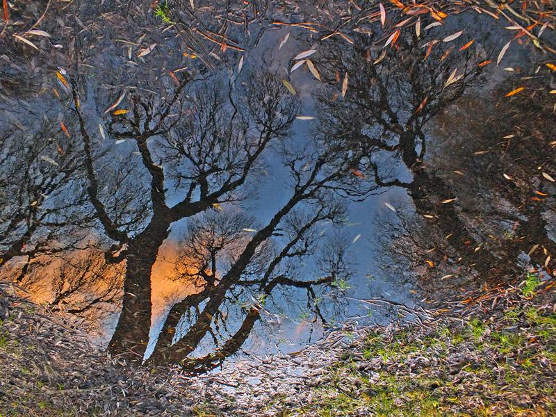 """фото """"Омут небесный..."""" метки: пейзаж, разное, ива, лужа, небо, осень"""
