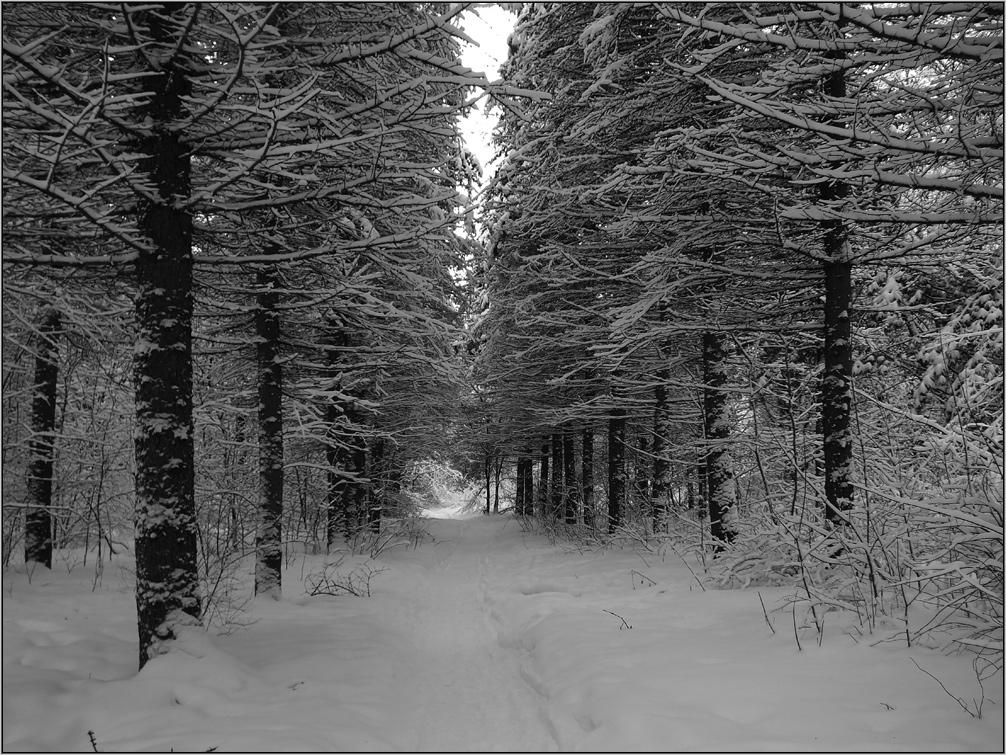 Кабачковая икра рецепт с фото на зиму это
