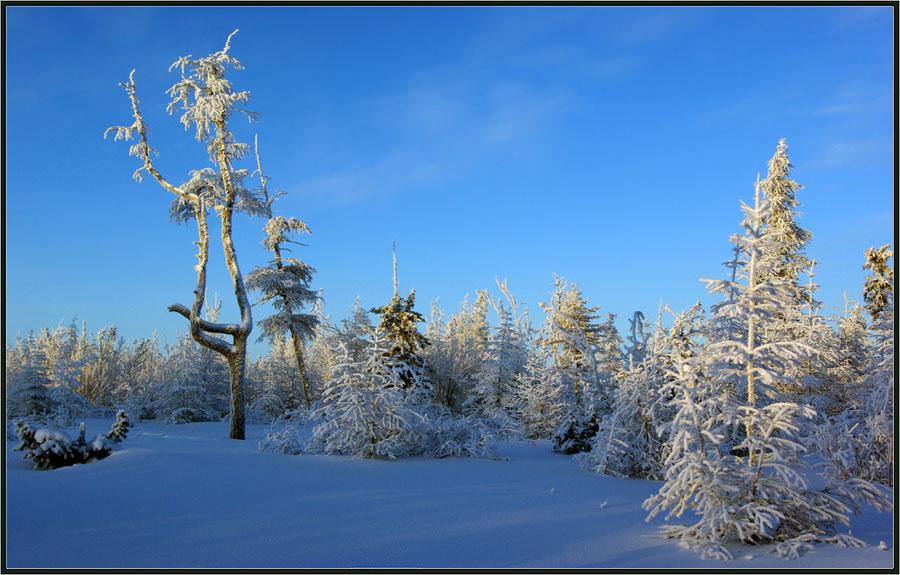 могут быть фото в тайге на морозе гроссман впервые увидел