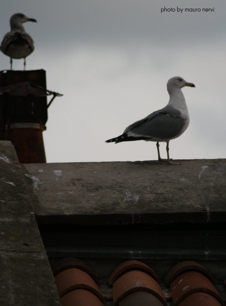 "фото ""on the roof"" метки: репортаж,"
