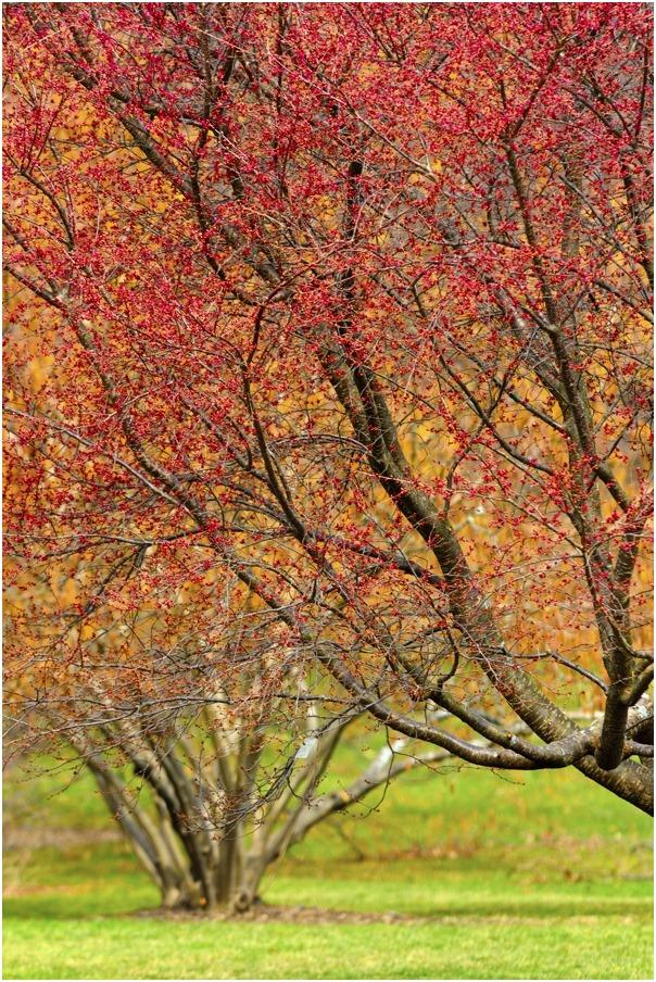 """фото """"весенние краски"""" метки: пейзаж, природа, весна, цветы"""
