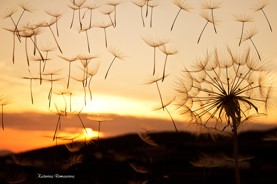 "photo ""***"" tags: nature, landscape, travel, Greece, одуванчик"