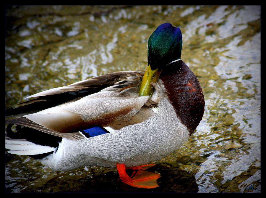 """фото """"Duffy  the blowing elegant"""" метки: природа,"""