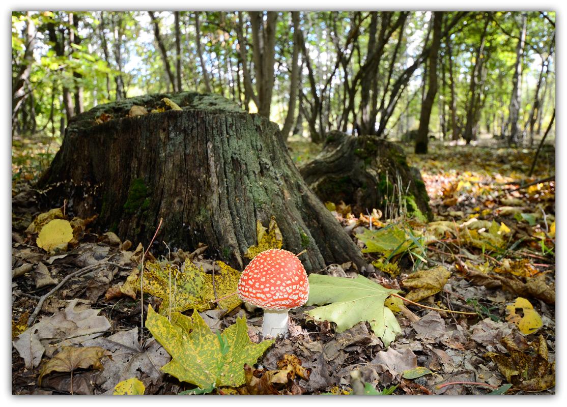 "фото ""Один в лесу дремучем"" метки: природа,"