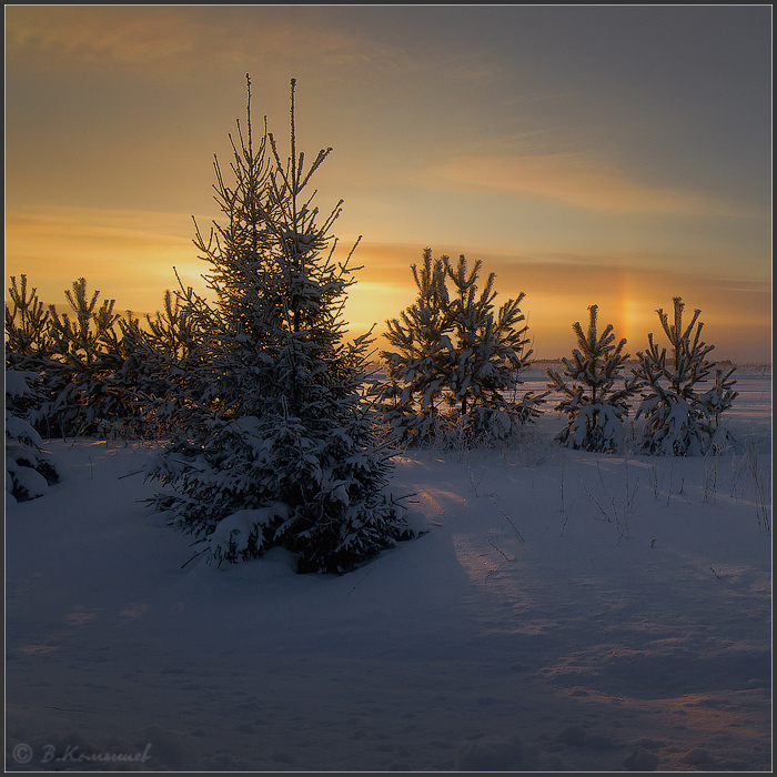 "photo ""***"" tags: landscape, nature, evening, field, forest, sky, sunset, winter, январь"
