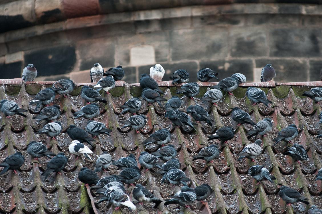 "photo ""Birds"" tags: fragment, крыша, птицы, черепица"
