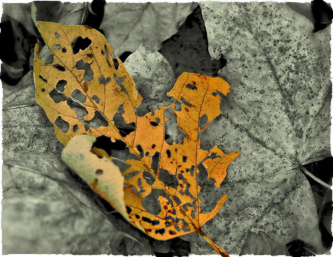 """фото """"Оригами..."""" метки: макро и крупный план, природа, осень"""