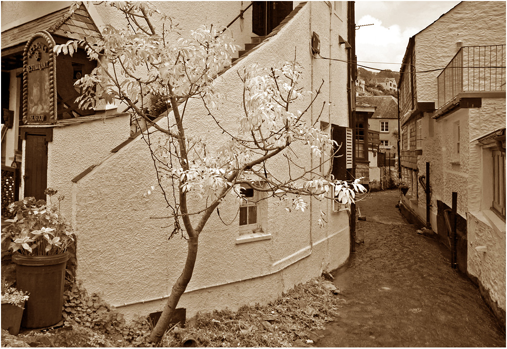 "photo ""Polperro."" tags: black&white, travel, architecture, autumn, tree, water"