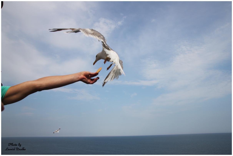 """фото """"Кормление чайки"""" метки: разное,"""