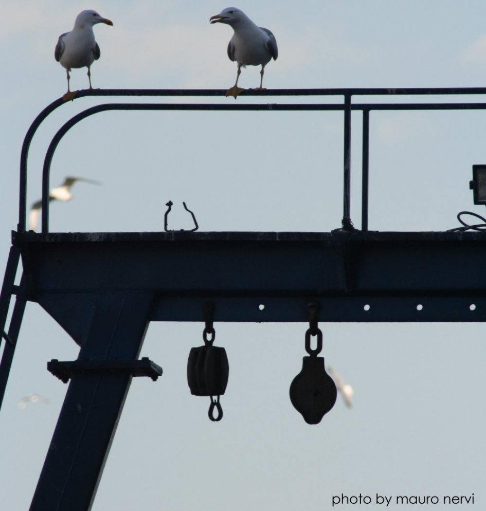 "фото ""dialogue between seagulls in the harbour"" метки: репортаж,"