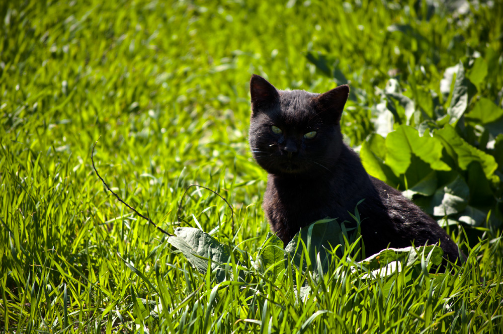 "photo ""***"" tags: nature, grass, tomcat"