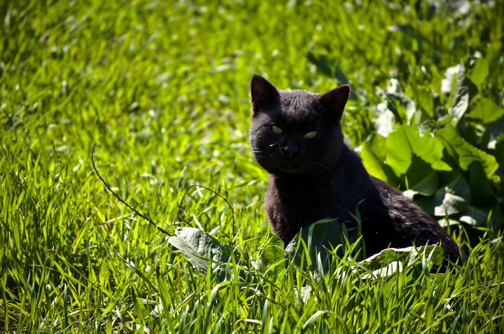 """фото """"изумрудный мяу"""" метки: природа, кот, трава"""