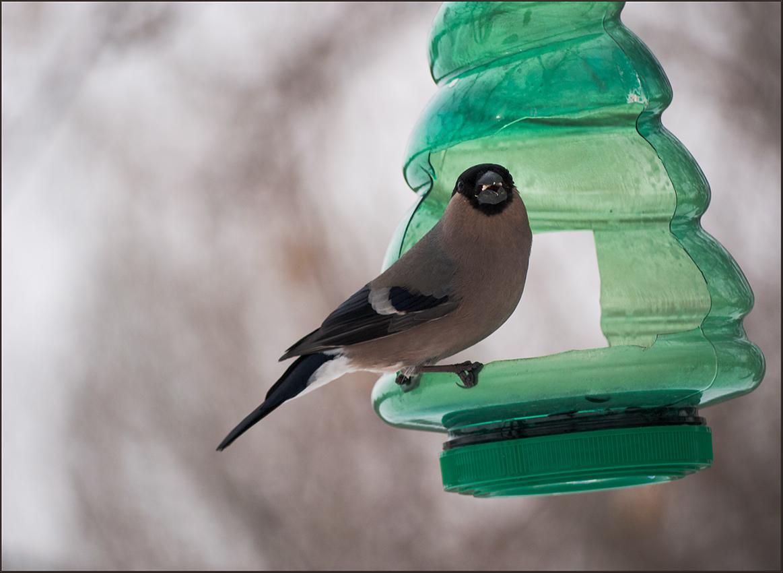 "фото ""И спросила птица у меня..."" метки: природа,"