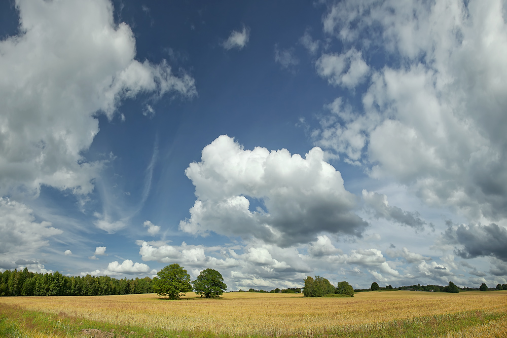 "photo ""***"" tags: landscape, clouds, summer, Беларусь"