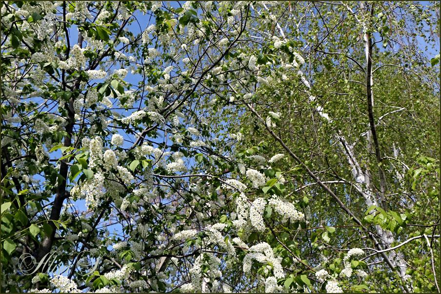 """фото """"14 апреля 2013 года."""" метки: природа, цветы"""