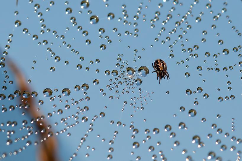 """фото """"*"""" метки: макро и крупный план, природа, капли, паутинка, паучок, роса"""