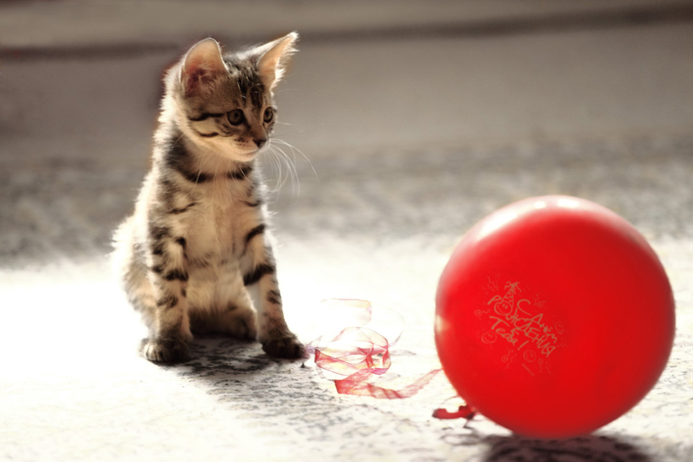 """фото """"***"""" метки: разное, воздушный шарик, котёнок"""