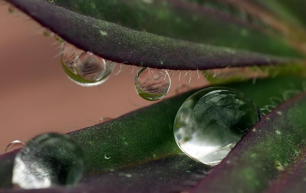 """фото """"Капитошки"""" метки: макро и крупный план, природа, капли"""