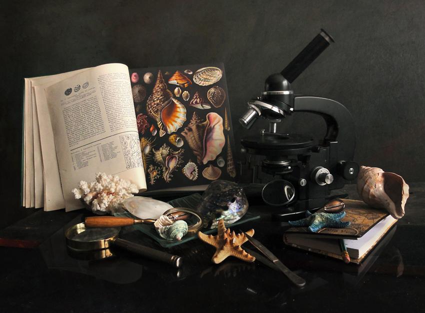 "photo ""***"" tags: still life, Ракушки микроскоп"