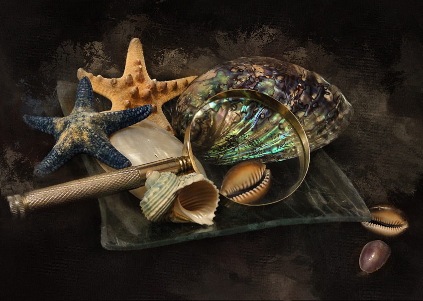 "фото ""Звезды и ракушки"" метки: натюрморт, звезда морская, ракушка"