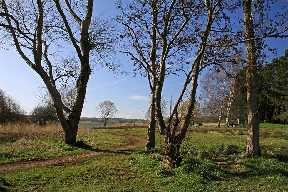 """photo """"April."""" tags: nature, spring, sun, дерева"""