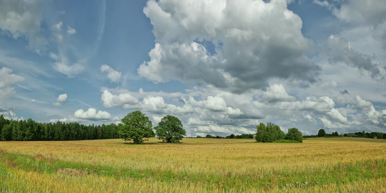 """фото """"Июльская"""" метки: пейзаж, Беларусь, лето, облака"""