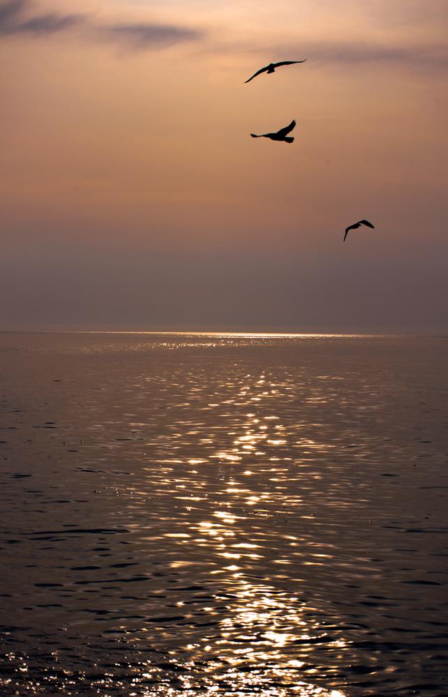 "фото ""чайки на закате"" метки: пейзаж, Крым, закат, море, чайки"
