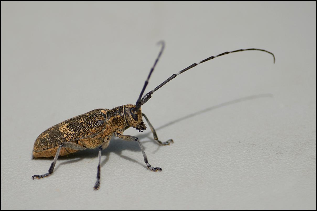 """фото """"Древесный жук"""" метки: макро и крупный план,"""
