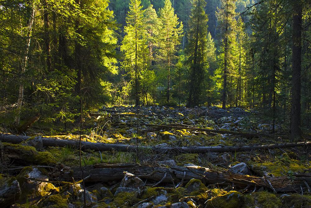 "фото ""Курумник"" метки: пейзаж, природа,"