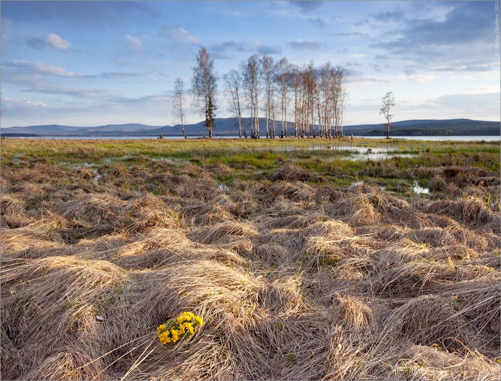 """фото """"Весна / 0207_0136"""" метки: пейзаж, весна, вода, облака, озеро, цветы"""