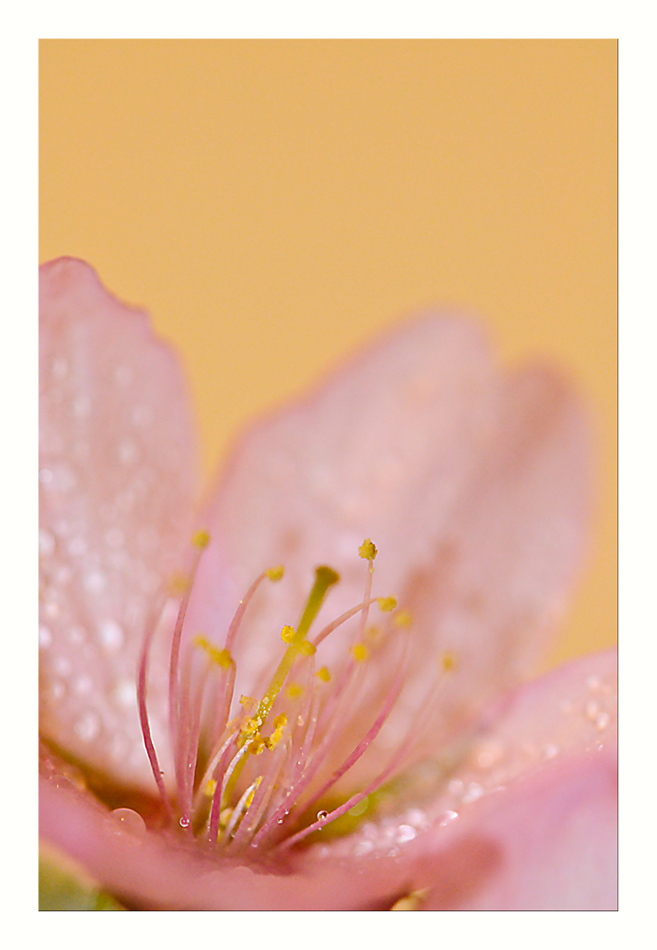 "photo ""Tears inside"" tags: macro and close-up, nature,"