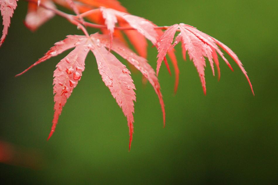 "фото ""green & red"" метки: природа, путешествия, натюрморт, spring, цветы"