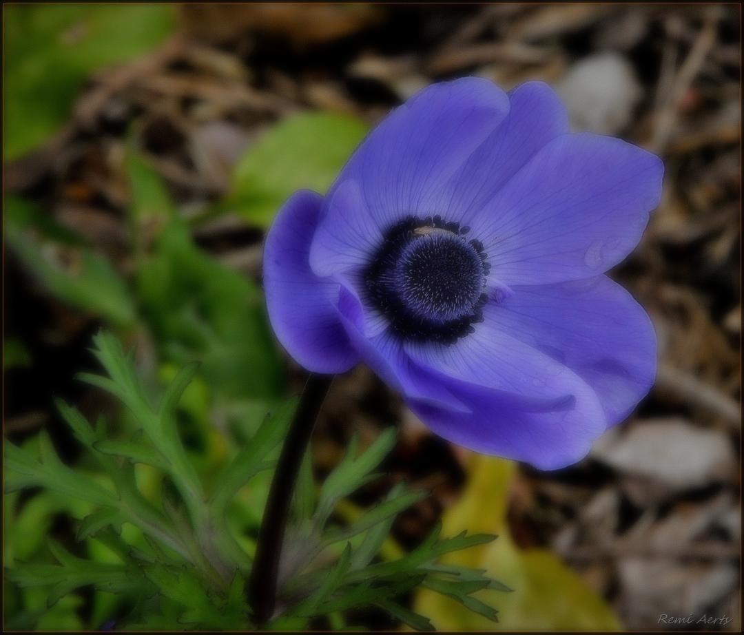 """фото """"***"""" метки: макро и крупный план, природа, spring"""