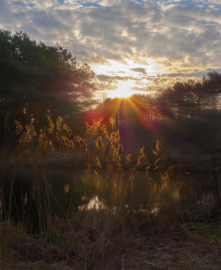 """фото """"Как зажигаются камыши..."""" метки: пейзаж, апрель, весна, солнце, утро"""