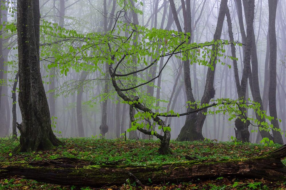 """фото """"Весенний этюд"""" метки: пейзаж, Кавказ, весна"""