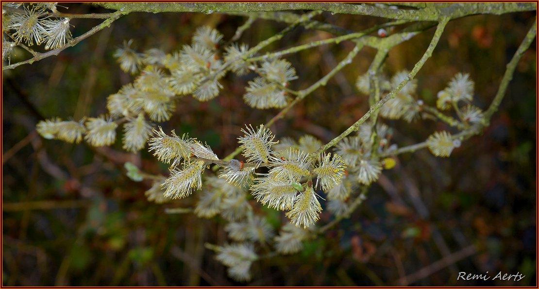"""фото """"***"""" метки: природа, макро и крупный план, spring"""
