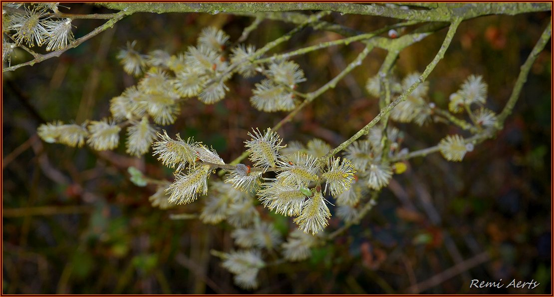 "photo ""***"" tags: nature, macro and close-up, spring"
