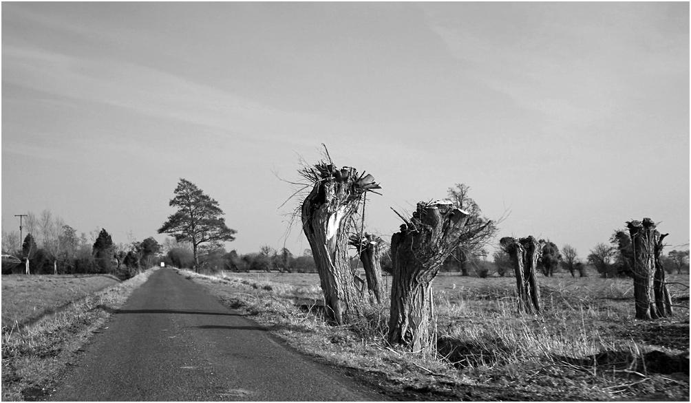 """фото """"Запиленные."""" метки: природа, дерева"""